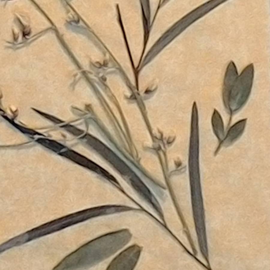 pressedflowers_juliebouquet_detail
